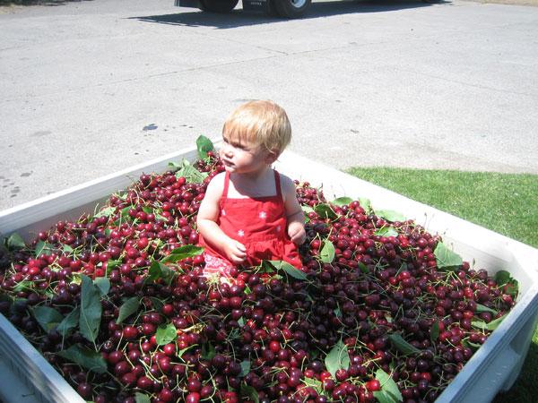 Mals.cherries