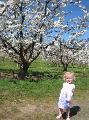 MalsBlossoms